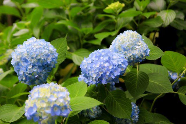 3. 長谷寺で花を見る