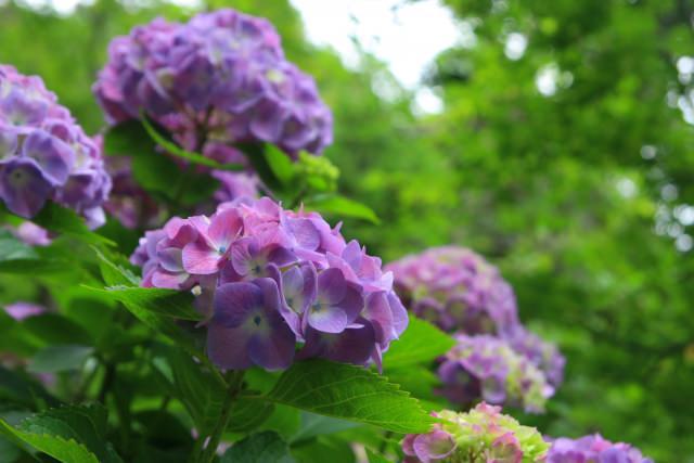 四季折々の花に癒やされる