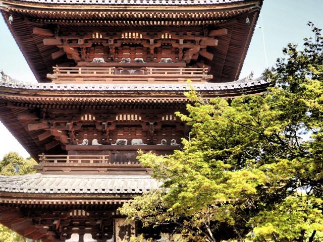 6. 遅咲きの御室桜が美しい「仁和寺」