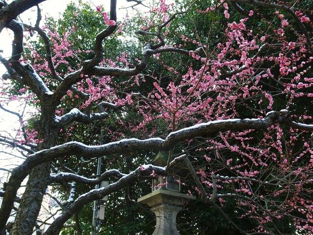 3. 菅原道真と梅の花