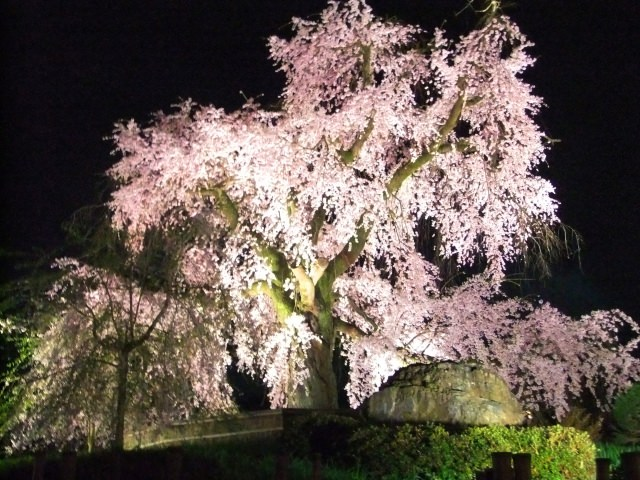 桜・梅を見よう