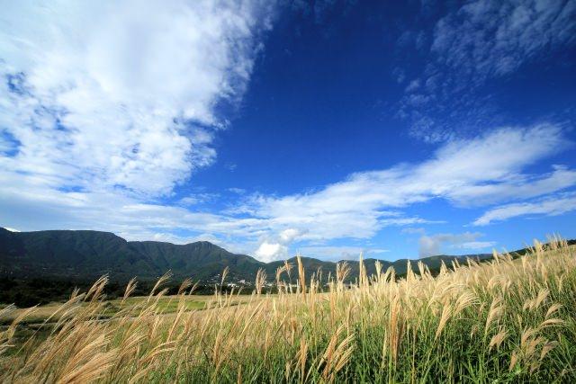 9.仙石原ススキ草原で写真撮影