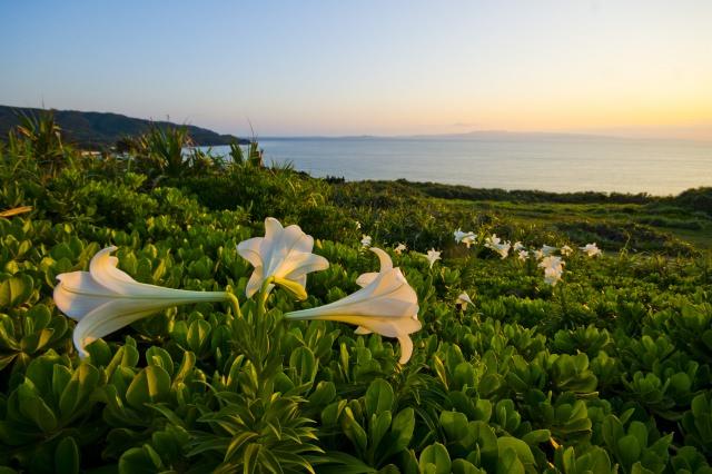 8. 石垣島の美しい景色を一望する「御神崎」