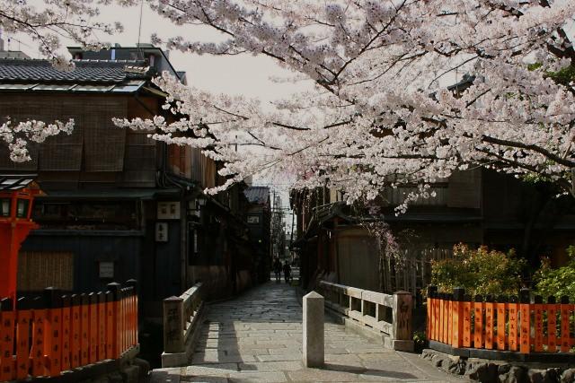 春の京都の魅力はこれ!