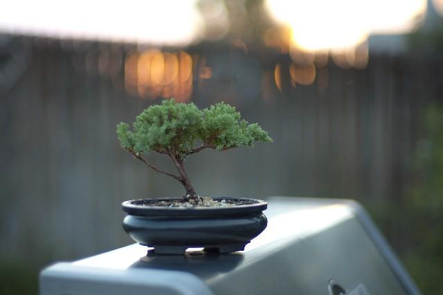 和のガーデニング、盆栽を体験できる「春花園」