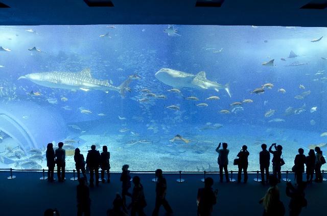 美ら海水族館ってどんなところ?