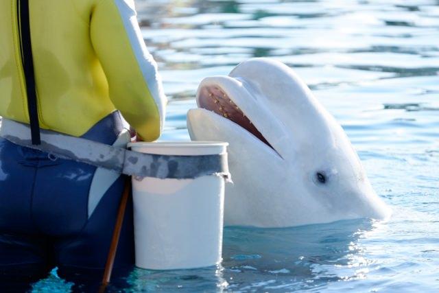3. 海の動物たちと直接触れ合う!「ふれあいラグーン」