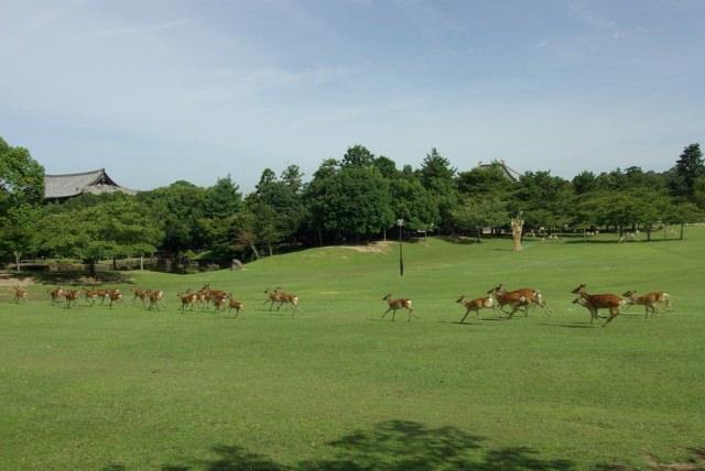 奈良公園ってどんなところ?