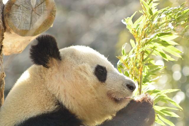 4. 上野動物園