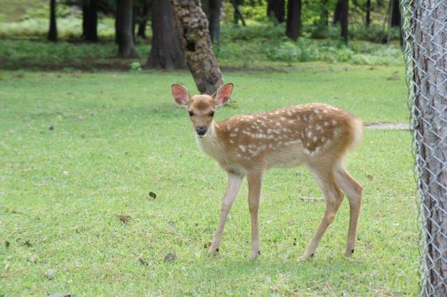 奈良公園で鹿と遊ぼう!魅力満載の観光の見どころスポット6選!