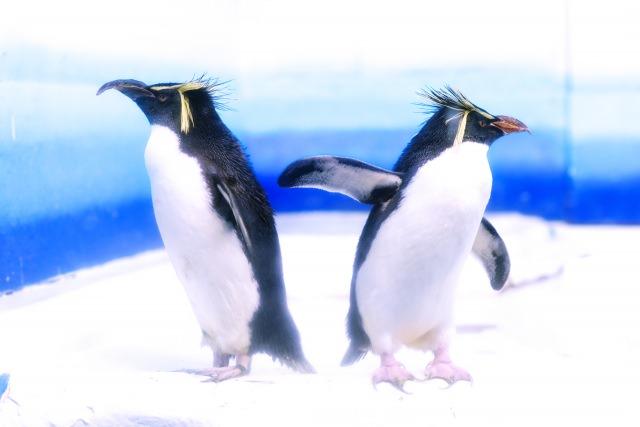 8. 北海道観光で特に人気の高い「円山動物園」