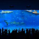 沖縄美ら海水族館の観光の見どころ、アクセス、料金を徹底ガイド!