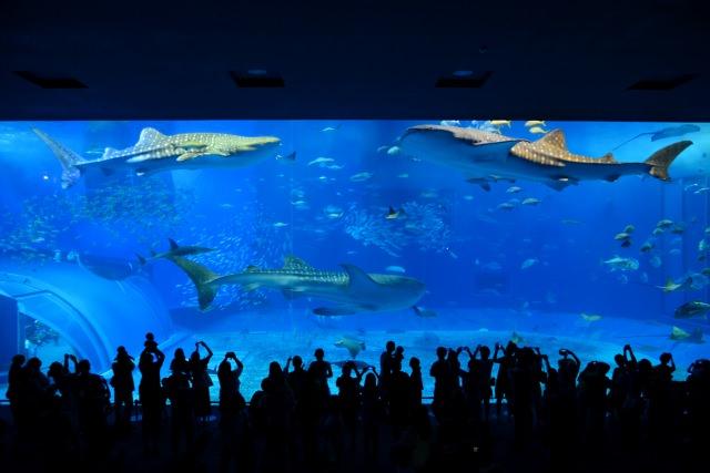 1. 水族館のメインスポット!大迫力の「黒潮の海」
