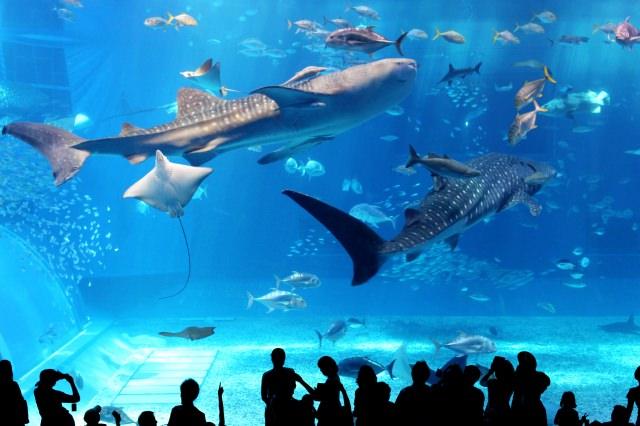 1. 沖縄旅行の定番スポット「美ら海水族館」