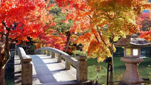 【第6位】 秋の紅葉が美しい「禅林寺永観堂」