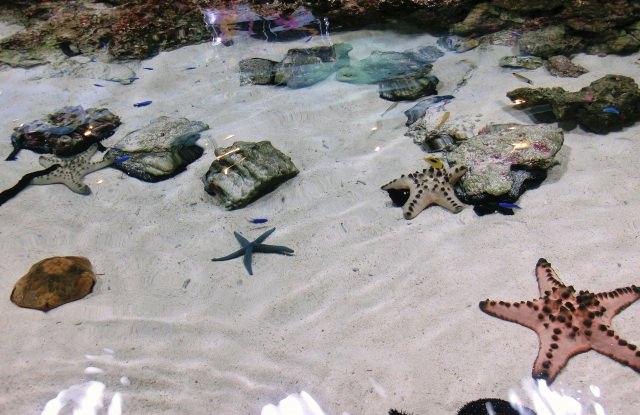 3. 実際に触れる浅瀬の生き物!「イノーの生き物たち」