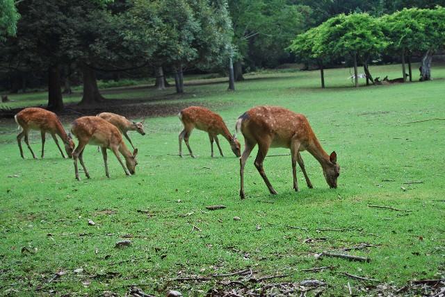 5. かわいい鹿たちと触れ合える「奈良公園」