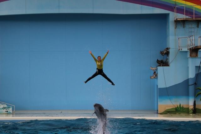 2. 可愛らしいパフォーマンスが魅力!海の動物たちのショー!