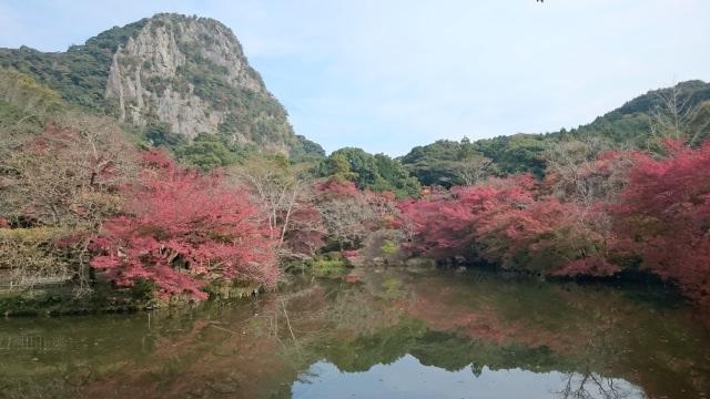 6. 美しい花々に心奪われる「御船山楽園」