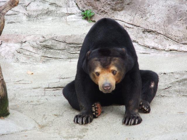 7. やっぱり動物が好きな方には「天王寺動物園」