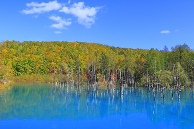 7. 幻想的なその姿に心奪われる「青い池」