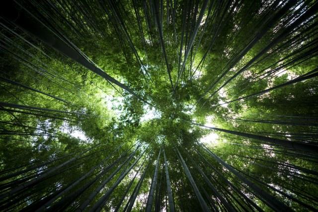 7. 青々とした竹庭が美しい竹の寺「報国寺」
