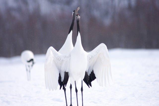 1. どんな季節でも楽しめる大自然の風景「釧路湿原」