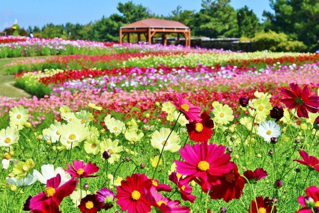 7. 海を望む自然いっぱいの公園!「国営明石海峡公園」