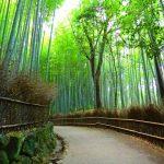 定番コースから穴場まで!京都の嵐山で人気のおすすめ観光スポット10選!