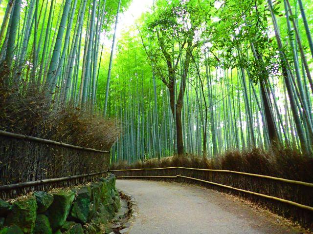 1. 澄んだ空気、鮮やかな景色。ついSNSに乗せたくなる写真が撮れる「竹林」