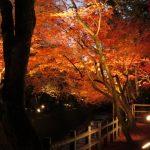 いざ、秋の美しい京都へ!絶景の紅葉が見られる人気のおすすめスポット10選!