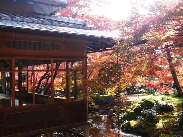 9. 鳥の声や風の音を感じながら見る紅葉景色「宝厳院」