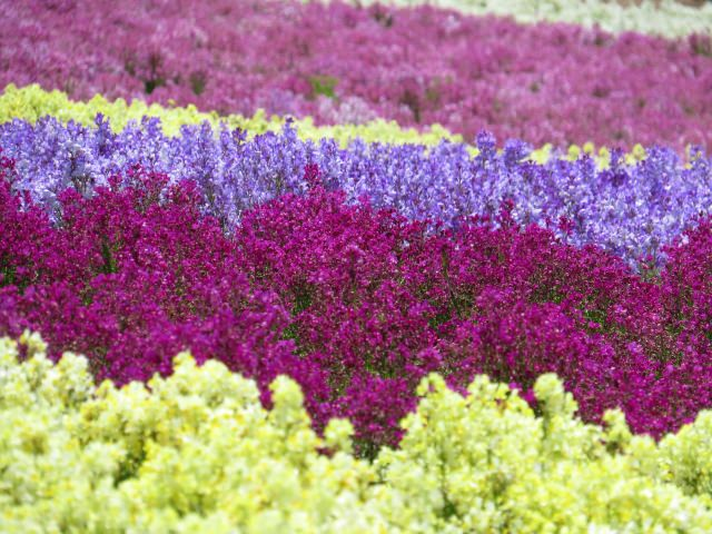 9. 四季を感じる花々に癒されるスポット!「くじゅう花公園」