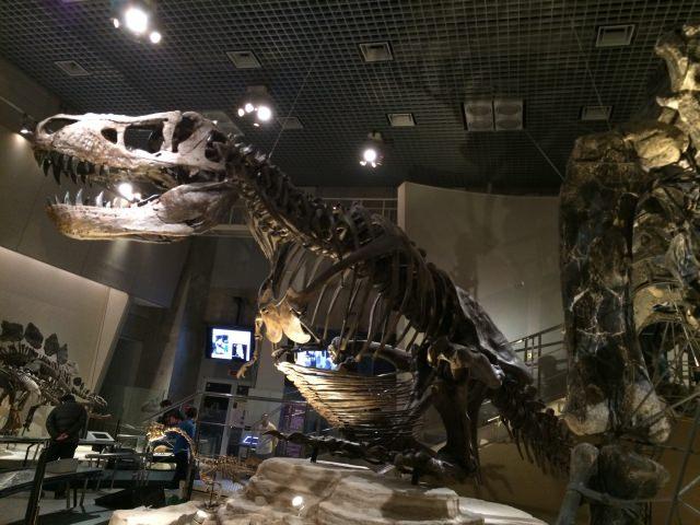 5. 東京で恐竜の化石を見に行こう!見どころ満載の「国立科学博物館」
