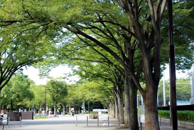 5. 普段では味わえない静かな空間へ。「代々木公園」