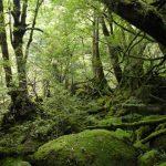 美しすぎる!鹿児島県で一度は見たい人気のおすすめ観光スポットランキング10選!