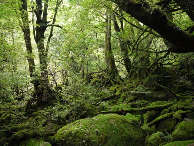 1. 手つかずの大自然が満喫できる世界遺産「屋久島」