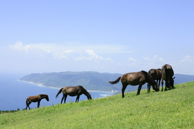 3. 野生に生きる馬を間近でみることができる宮崎の観光地!「都井岬」
