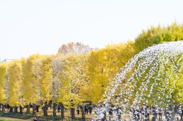 7. 母女二人一起去西立川觀光吧!「國営昭和紀念公園」