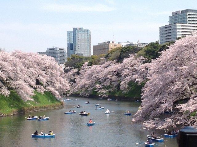 2. 桜の下、母娘で一緒に歩こう!「千鳥ヶ淵緑道」