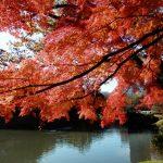 いざ秋の東京の美しい紅葉へ!定番から穴場まで絶対におすすめな花見スポット10選!