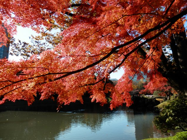 5. The spot to appreciate the miniature autumnal Japanese landscape [Koishikawa Korakuen]