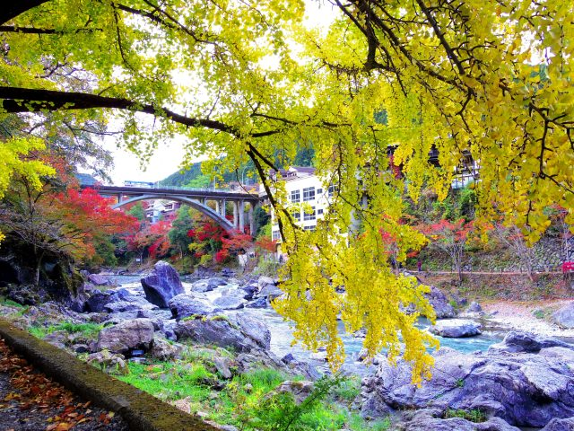8. Admire the autumnal tints which are reflected in the water The spot full of nature in Tokyo             [Okutamakohan]
