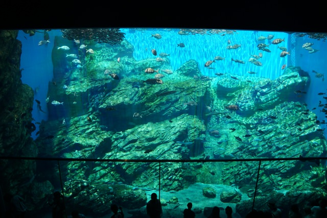 3. Be comforted with the cute sea creatures The sightseeing spot in Miyagi [Sendai Umi-no-mori Aquarium]