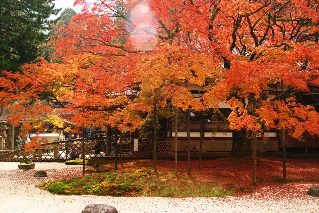 3. 年に2回しか入れない佐賀の観光スポット「九年庵」