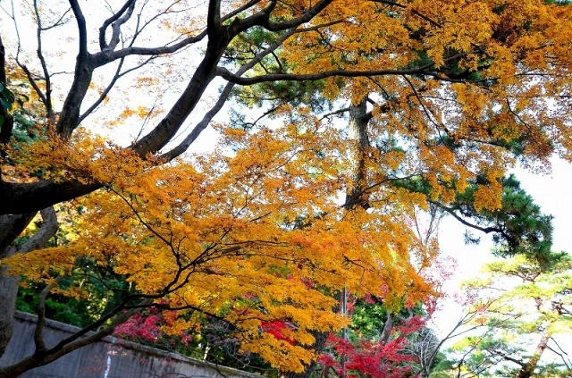 9. Enjoy the autumnal tints, feeling the history            The center of Tokyo[Kohkyo Higashi-gyoen]