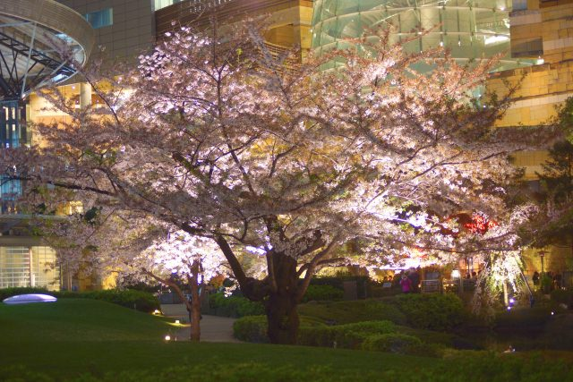 10. 日本ならでは和の趣を感じられるスポット。東京の名所で見る夜景「毛利庭園」