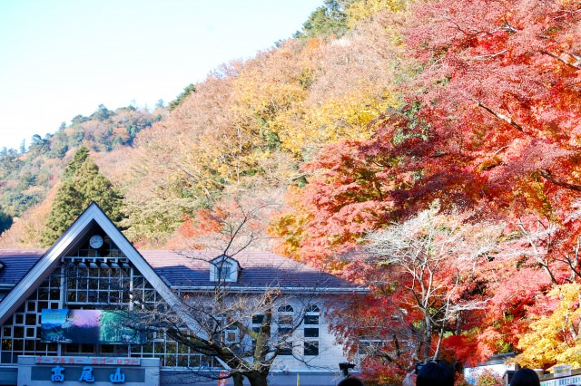7. Be fascinated by the mountains which are turned aglow by the autumnal tints. If you talk about climbing a mountain, it is [Mt. Takao].