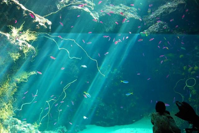 2. 福島の海を再現!自然に触れる体験なら「アクアマリンふくしま」
