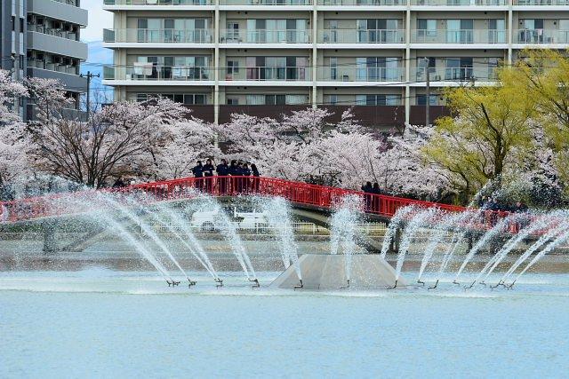 9. 1300本もの桜が咲く。自然感じるスポット「開成山公園」